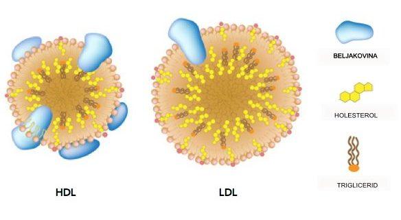 Shematski prikaz LDL in GDL
